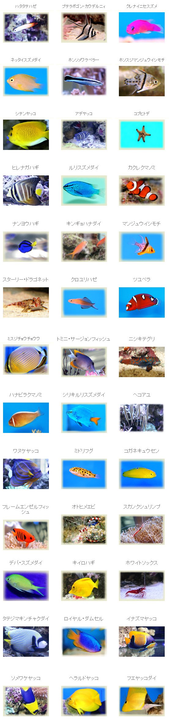 Ocean fish-海洋魚-